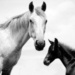 Mum and her Foal.